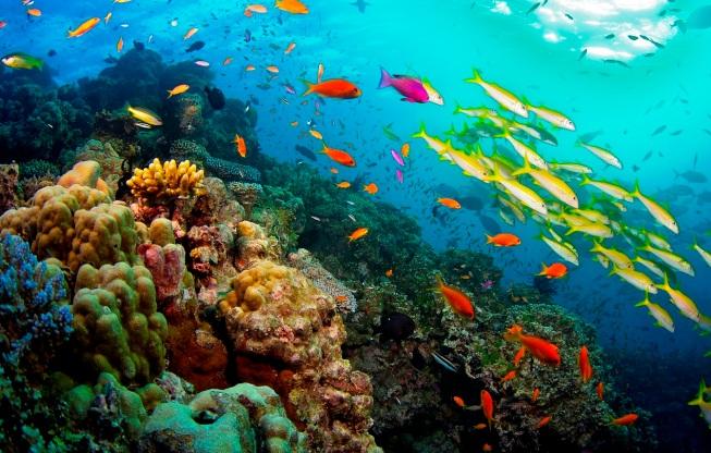 La Grande Barriera Corallina Australiana prima dello sbiancamento